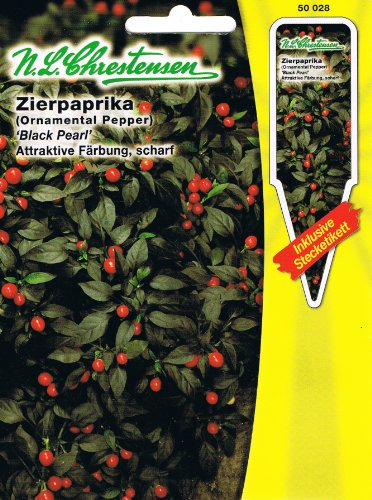 Zierpaprika 'Black Pearl' schwarz, attraktive Färbung scharf ( mit Stecketikett) 'Capsicum annuum'
