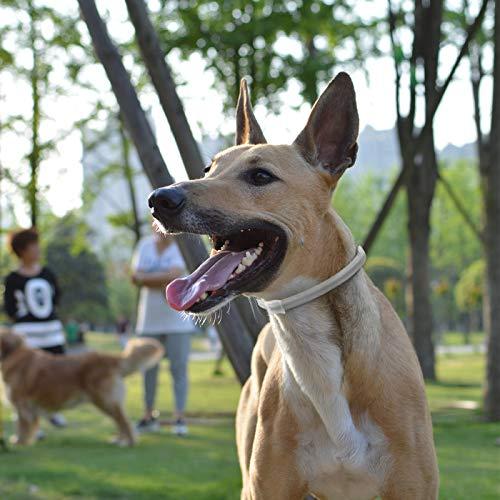 Zoom IMG-1 magichome collare antiparassitario per cani