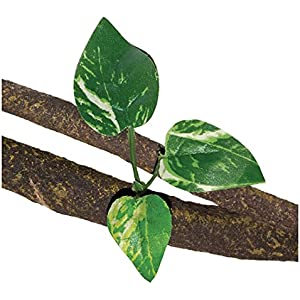 RepStyle Decor Cane Vine Pflanze mit Triple Cordate Blätter,