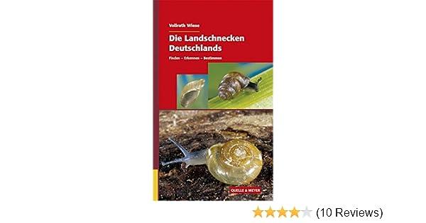 Die Landschnecken Deutschlands: Finden – Erkennen – Bestimmen ...