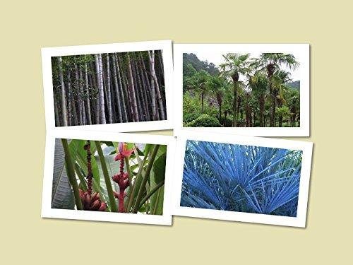 Winterharter Exoten Mix  Bananen , Palmen & Bambus  60 Samen