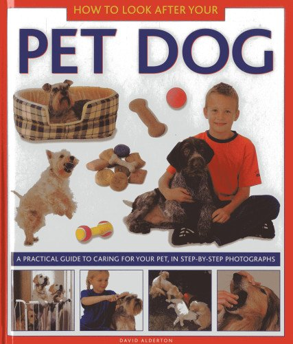 How to Look After Your Pet Dog