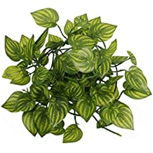 Hängepflanzen Zimmer suchergebnis auf amazon de für hängepflanzen zimmer