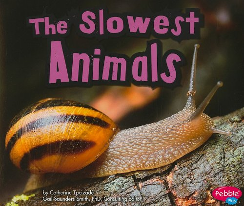 The Slowest Animals Paperback
