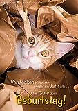 Lustige Doppelkarte, Karte, Grußkarte, Geburtstagskarte mit Kuvert mit Katze im 3er Set