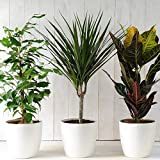 Indoor Plants House Plant Collection Air Purifying Scandi Lifestyle Trendy Plants with Unique Eye Catching Designs, 3 or 6 x Scandi Houseplant Collection Lucky Dip by Thompson and Morgan
