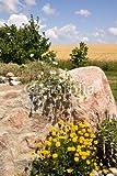 druck-shop24 Wunschmotiv: Steinmauer mit Sommerblumen und Weizenfeld #67369402 - Bild als Klebe-Folie - 3:2-60 x 40 cm/40 x 60 cm