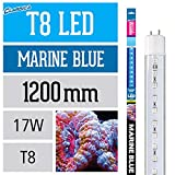 Arcadia FEB36 T8 LED-Lampe