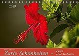 Zarte Schönheiten - Feine HibiskusblütenAT-Version (Tischkalender 2019 DIN A5 quer): Zarte Hibiskusblüten in prachtvollen Formen und Farben (Monatskalender, 14 Seiten ) (CALVENDO Natur)