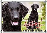 Hundeschild - Curly Coated Retriever - stabiles Metallschild mit Fotodruck - rostfrei, DIN A4