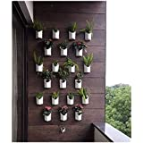 "Planters Plastic Wall Hanging Planter, White, Front Height - 4"", Back Height - 6.5"", Side Width - 5.5"", Back Width - 5"", 12 P"