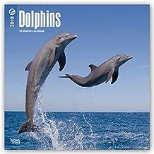 Dolphins - Delfine 2018 - 18-Monatskalender: Original BrownTrout-Kalender [Mehrsprachig] [Kalender] (Wall-Kalender)