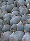 Kürbis Blue Ballet (Cucurbita maxima Duch.) 7 Samen