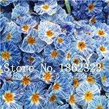 Pinkdose 200 pz Reale Sera Primula Europa Primula malacoides Mix Colore Bonsai Fiore per la casa Giardino supples pianta Regalo per la Moglie: 17