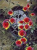 100 Pcs Accrobranches Bonsai Rose semences vivaces colorées Rosa Fleur odorante Différents Types d'escalade Plantes Maison et Jardin: 18...