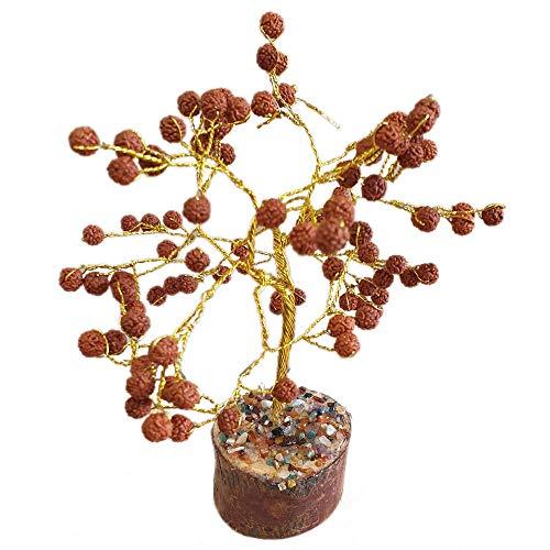 Royal Paradise Garden Rare Rudraksha Religious Tree Shiva's teardrops 1 Healthy Live Plant