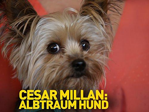 cesar-millan-albtraum-hund-dt-ov