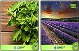 Semi Pinkdose delle erbe selvatiche Rocket, lavanda erbe Semi Combo Pack By Pinkdose Seed