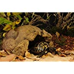 Exo Terra Tortoise Cave 28 x 19 x 39 cm 6