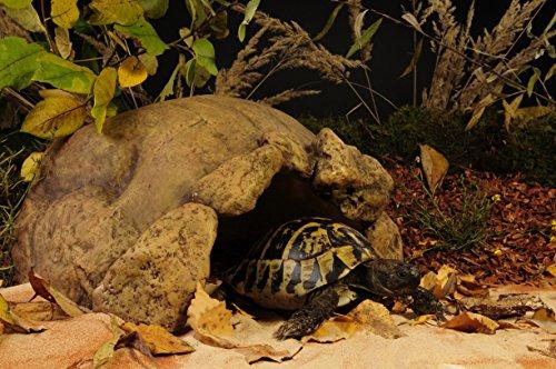 Exo Terra Tortoise Cave 28 x 19 x 39 cm 3