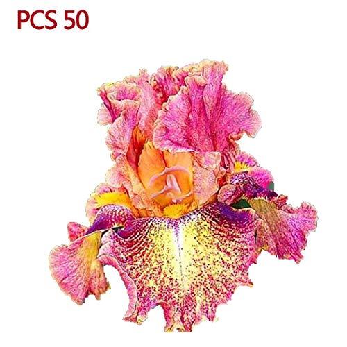 Victorig 50 unids/bolsa Iris Seeds Home Garden flores perennes paisaje Semillas