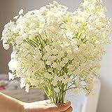 WuWxiuzhzhuo 30Stück Colorful Baby 's Breath Gladiolen Samen, Flower Garden Bonsai Pflanze Decor Weiß