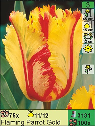 """Papageientulpe\"""" Flaming Parrot Gold\"""" (10 Blumenzwiebeln)"""