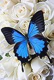 Galería lienzo Art-Blue mariposa de rosas blancas fotografía Giclée impresión sobre lienzo, estirada y enmarcado, hogar moderno decoración arte de la pared, 8por 25,4cm, listo para colgar
