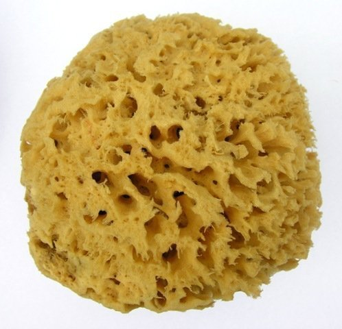 Unbleached Sea Sponge Soft Honeycomb 13-14cm, 5 -5.5\\