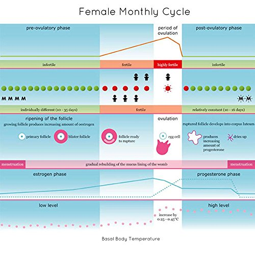 Lady-Comp-the-worlds-most-advanced-dual-purpose-fertility-monitor-natural-birth-control-family-planning-without-any-invasive-contraceptives-and-side-effects-with-premium-effectiveness-and-precise-ovul