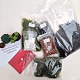 Kit de terrarium à bricoler avec cactus et succulent, Guide pas-à-pas, Emballé au Royaume-Uni Medium with Plants