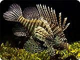 fish OE_MOUSEPAD_2435