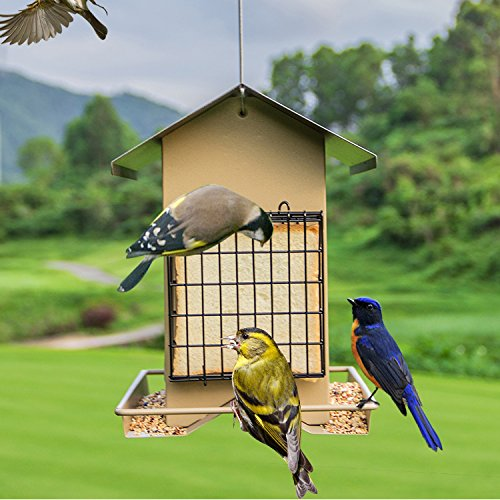 wild wooden box coloured birds house in new tit feeder bird p small deluxe s garden hanging nesting robin triple modern