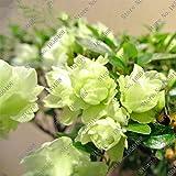 100 pc / sacchetto Rare Bonsai 23 varietà di Azalea casa fai da te e piante da giardino con Sakura semi di fiori giapponese