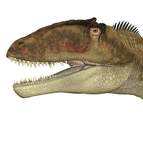 Corey Ford/Stocktrek Images – Carcharodontosaurus dinosaur head. Photo Print (71,12 x 71,12 cm)
