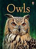 Owls (Usborne Beginners) (Beginners Series)