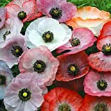 Klatschmohn - Mohn Mother of Pearl - 500 Samen