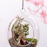 Wicemoon Hängende Glasvase Schiffe Sphärische Vase Transparent Dekorative Hausgarten Für Home Hochzeit Dekoration (12cm)