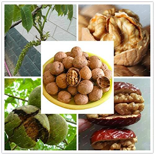 Casavidas New Rare Walnut Garten Bio-Obst Grüne Bonsai vergossen Baum Pflanze 300PCS Kinder essen Nutzen für Intelligenzentklung