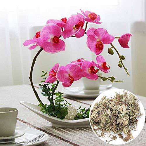 Dough.Q Sphagnum Moos - Substrato di Torba Naturale per Regolare l'umidità nel terrario, Confezione da 12 l