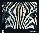 WWF Wildlife - Kalender 2019 - teNeues-Verlag - Fotokalender - Wandkalender mit faszinierenden Naturfotografien - 46 cm x 39 cm