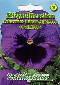 Stiefmütterchen Schweizer Riesen Alpensee Viola wittrockiana