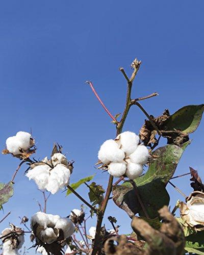 Impetus France Herren Boxershort Organic Weiß (Blanc)