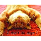 Ginger Cat, Don't Do Days! Fridge Magnet
