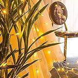 GlobaLink® 6×3M Lichterkette mit 600 LED-Lämpchen Lichtervorhang Licht Schnur, warm weiße Beleuchtung für Fenster, Weihnachten, Party, Outdoor, Hochzeit, Dekoration usw. für GlobaLink® 6×3M Lichterkette mit 600 LED-Lämpchen Lichtervorhang Licht Schnur, warm weiße Beleuchtung für Fenster, Weihnachten, Party, Outdoor, Hochzeit, Dekoration usw.