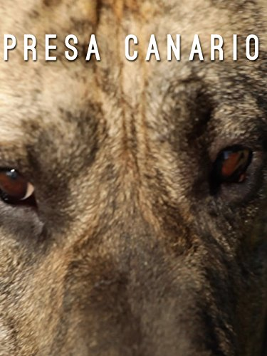 presa-canario-the-catch-dog-from-the-canary-islands-ov