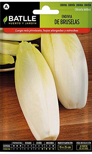 semi di ortaggi di batlle - varietà di cicoria bruxelles (semi)