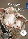 Schafe halten: artgerecht