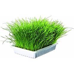 Bandeja Bio hierba para gatos, aprox.100 g