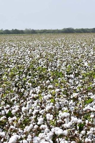 Alabama Cotton Field Journal: Take Notes, Write Down Memories in
